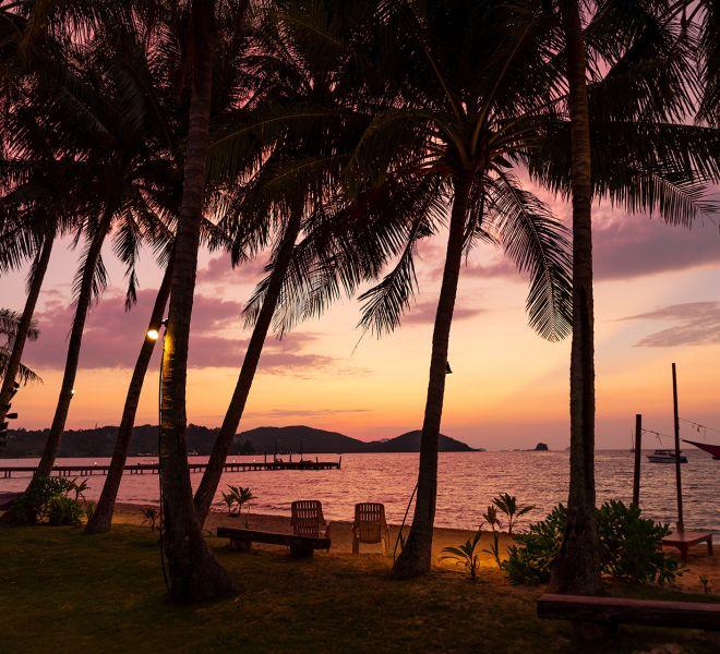 Palmen im Sonenaufgang in Thailand